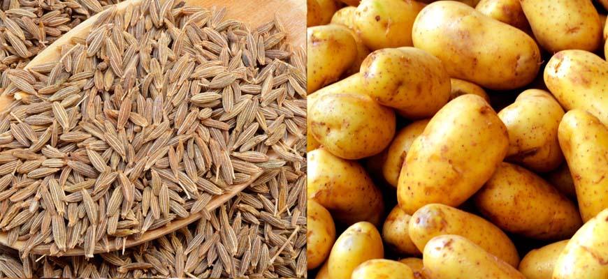 Akevitt kan lages av korn eller potet