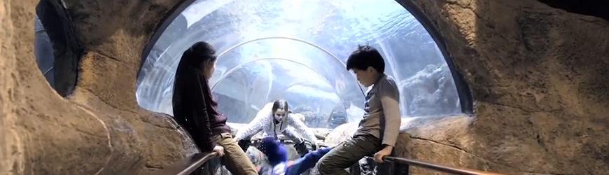 Foring av haier på Kategatscenteret