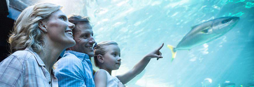 Familie akvarium